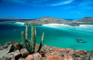 Cactus above clear blue water on Isla San Francisco