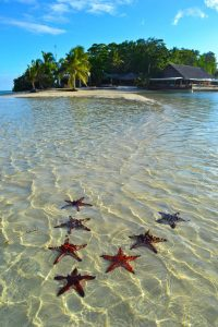 7 Star fish on a beach
