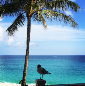 Bird on beach in the Bahamas