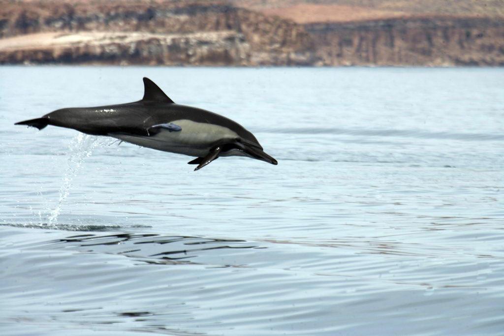 dolphin espiritu santo