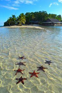 7 Star fish on a beach