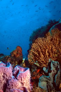 Coral Reefs in the Grenadines